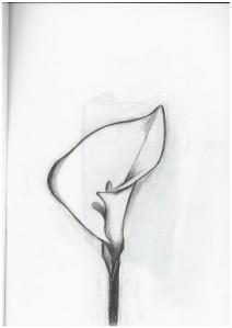 Value Sketchbook-ApeosPort-V C5580 T2(671559)-2292-160418132904